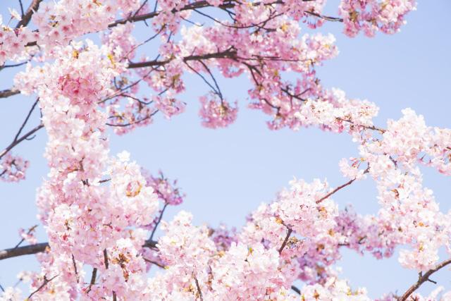 4月新年素スタート